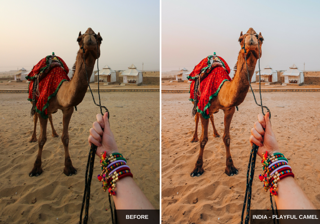 India- playful camel - Wherelifeisgreat Lightroom presets, Oriental vibes pack